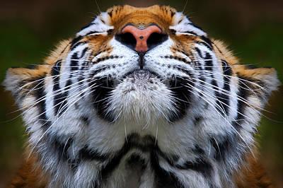 Tiger 1  Poster