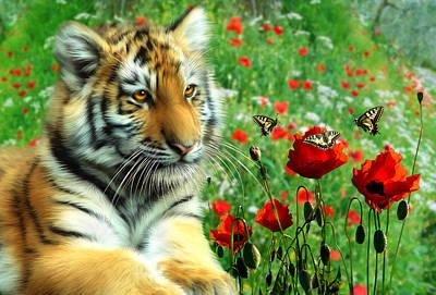 Tiger Butterflies Poster by Julie L Hoddinott