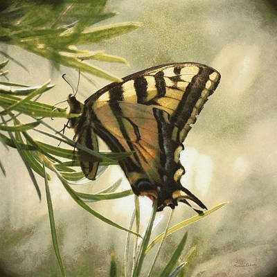 Tiger Swallowtail Painterly Poster by Ernie Echols