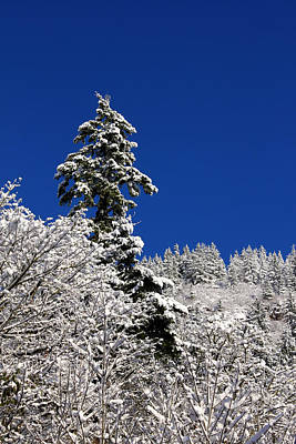Towering Tree On Snow Covered Mountain Poster