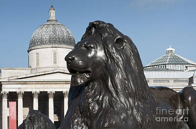 Trafalgar Square Lion Poster by Andrew  Michael