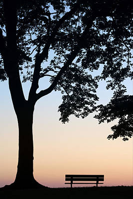 Tree And Bench Silhouette Poster by Darwin Wiggett