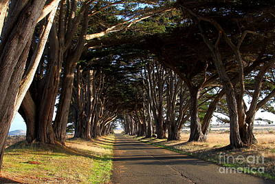 Tree Canopy Promenade Road Drive . 7d9977 Poster by Wingsdomain Art and Photography