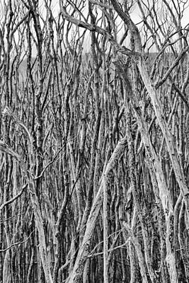 Tree Cemetery V2 Poster
