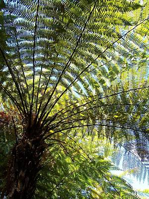 Poster featuring the photograph Tree Fern by Peter Mooyman