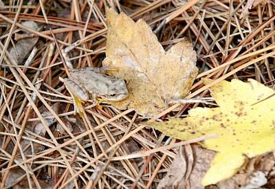 Tree Frog On Leaf Poster