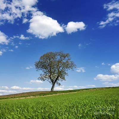 Tree In A French Landscape Poster by Bernard Jaubert
