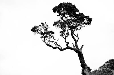 Tree In Black And White Poster by Yurix Sardinelly