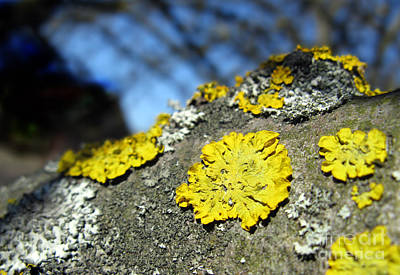 Poster featuring the photograph Tree Lichen by Ausra Huntington nee Paulauskaite