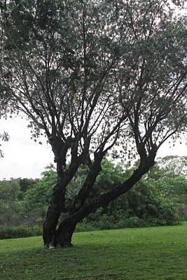 Tree Poster by Lorenzo Muriedas