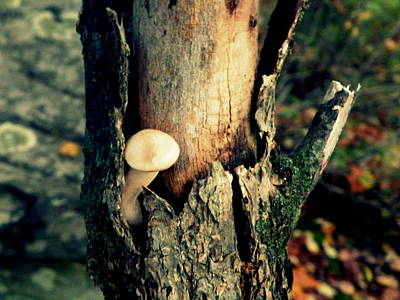 Tree Mushroom Poster by Josie Dupuis