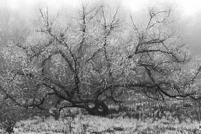 Tree Of Enchantment Poster by Debra and Dave Vanderlaan