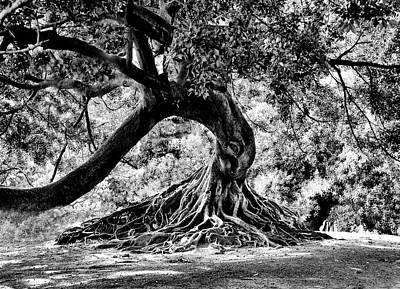Tree Of Life - Bw Poster by Kenneth Mucke