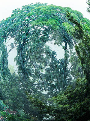 Poster featuring the photograph Tree Swirl Heavy Rain  by Glenn Feron