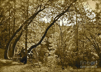 Trees Leaning Sepia Poster by Maynard Smith