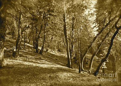 Trees On A Slope 2 Sepia Poster by Maynard Smith