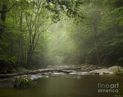 Tremont In Fog Smokey Mountains Poster