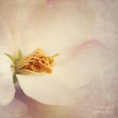 Tresfonds Heart Of A White Blossom Poster by Priska Wettstein
