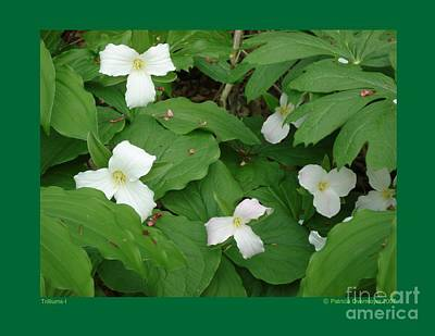 Poster featuring the photograph Trilliums-i by Patricia Overmoyer