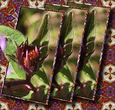 Poster featuring the photograph Triple Buds by Mario Carini