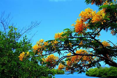 Tropics Poster