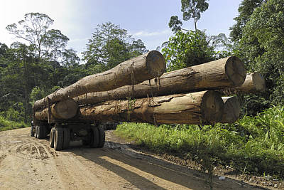 Truck With Timber From A Logging Area Poster