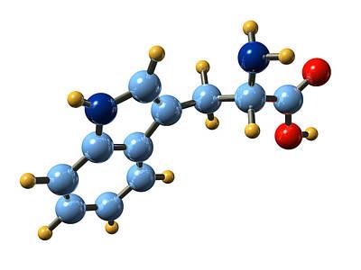 Tryptophan, Molecular Model Poster by Dr Mark J. Winter