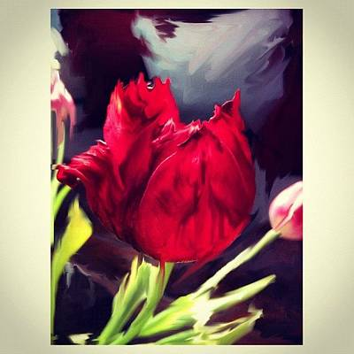 Tulip Aflame Poster by Paul Cutright