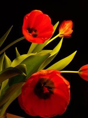 Tulip Arrangement 1 Poster by Peter Mooyman