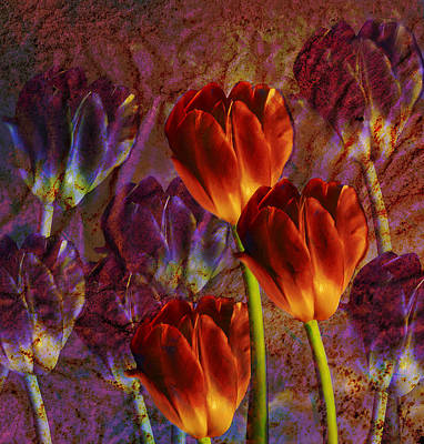 Poster featuring the photograph Tulip Field by Katy Breen