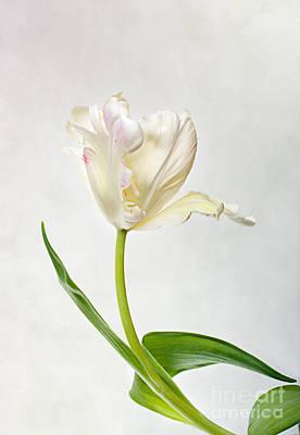 Tulip Poster by Nailia Schwarz