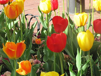 Poster featuring the photograph Tulips In The Sunshine by Shawn Hughes