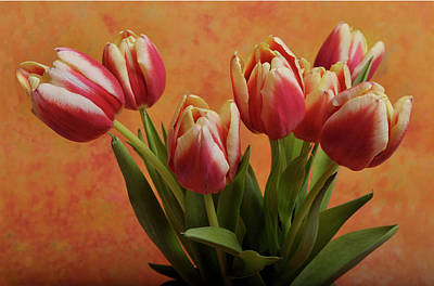 Tulips Poster by James Bethanis