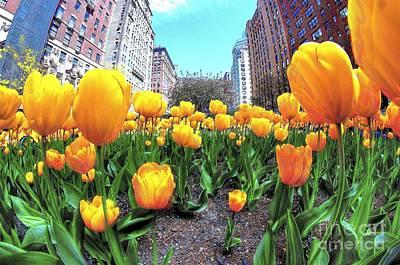Tulips On Park Avenue Poster by Jeff Landau
