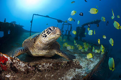 Turtle And Sealife Poster