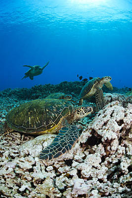 Turtles Together Poster