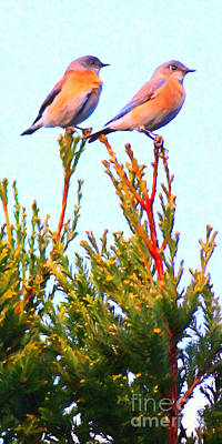 Two Bluebirds . Painterly Poster by Wingsdomain Art and Photography