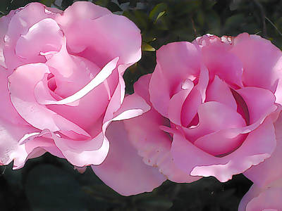 Two Delicate Pink Roses In Dappled Shade Poster by Elaine Plesser