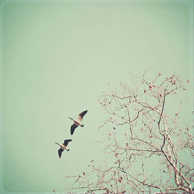 Two Geese Migrating Poster by Laura Ruth