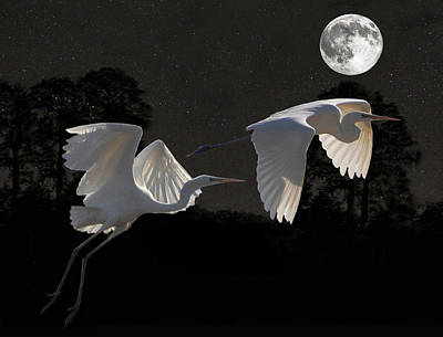 Poster featuring the mixed media Two Great Egrets  by Eric Kempson