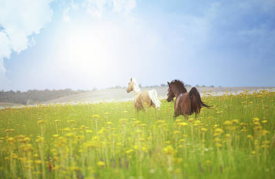 Two Horses Poster by Arman Zhenikeyev - professional photographer from Kazakhstan