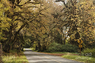 Two Lane Road Passing Under Trees Poster by Ned Frisk