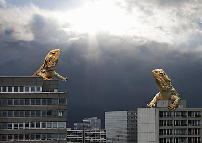 Two Lizards Debating On Top Of Skyline Poster by Luxx Images
