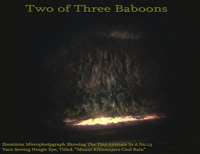 Two Of Three Baboons  Poster by Phillip H George