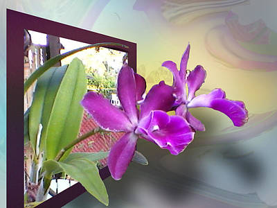 Poster featuring the digital art Two Orchids by Ginny Schmidt