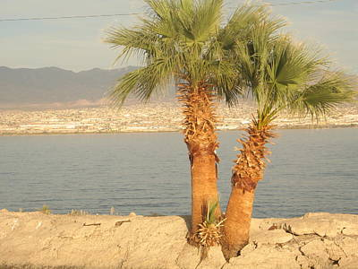 Two Palm Trees By A Lake Poster by Michaline  Bak
