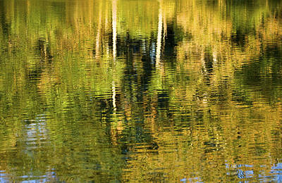 Two Palms Reflected In Water Poster by Rich Franco