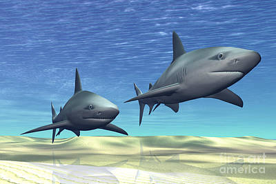 Two Sharks On Patrol Over A Sandy Reef Poster