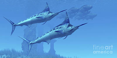 Two Sleek Blue Marlins Swim Close Poster
