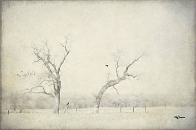 Two Trees In A Field Poster by Jeff Swanson
